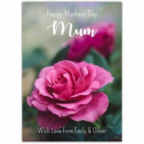 Pink Rose Happy Mother's Day Mum Card