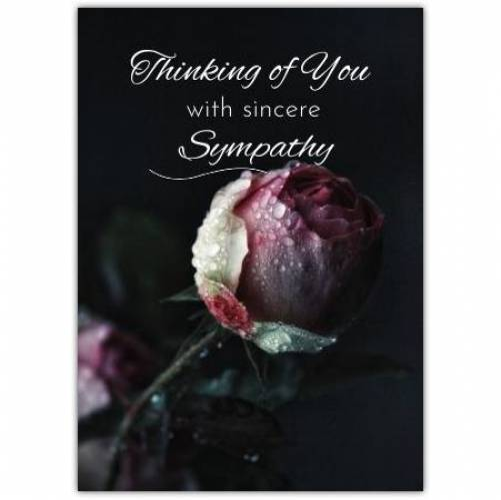 Sympathy Pink Rose  Card