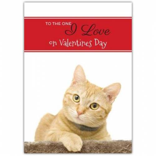 To The One I Love On Valentines Day Cat  Card
